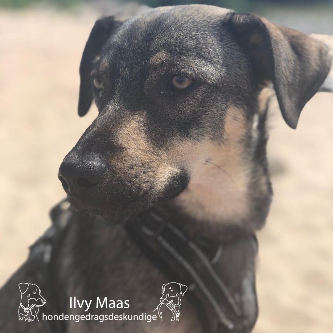 Hondengedragsdeskundige Ilvy Maas10 tips voor het opvoeden van een hond